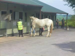 Horses Trust